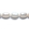25 Fresh Water Pearls 5-7mm