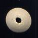 White Disk Wood 6X15mm #4
